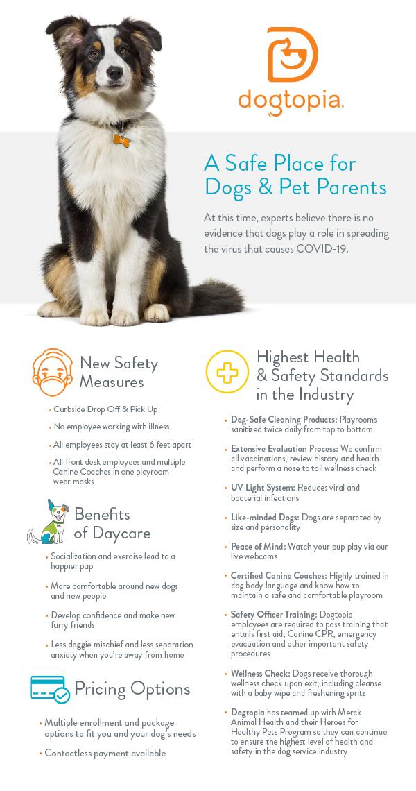 Garderie Dogtopia, un lieu sûr pour les chiens et les parents d'animaux