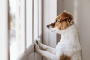 Minimize separation anxiety with your dog