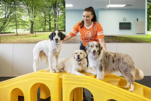 Dogs playing in Dogtopia dog daycare playroom.