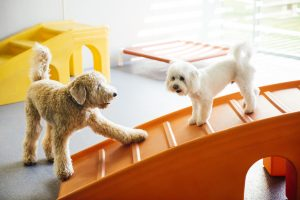 Puppy socialization at Dogtopia daycare centers.