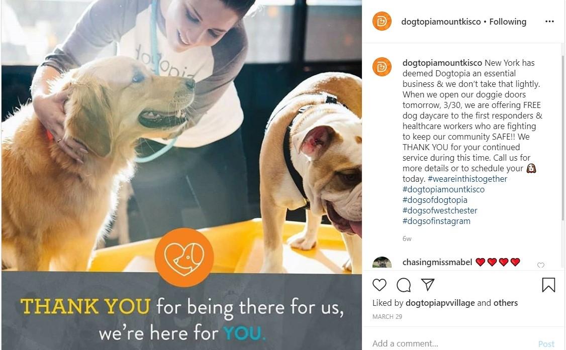 Dogtopia Mount Kisco offre une garderie gratuite pour chiens aux premiers intervenants de New York et aux travailleurs de la santé.