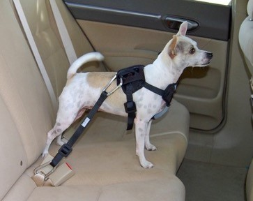 Dog safety harness with tether that attaches directly to auto's seatbelt webbing.