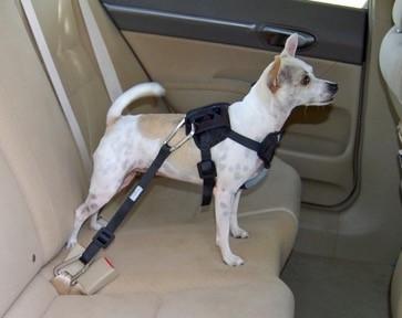Harnais de sécurité pour chien avec attache qui se fixe directement à la sangle de la ceinture de sécurité de l'automobile.