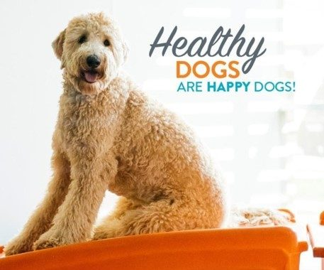 Happy dogs are happy dogs!