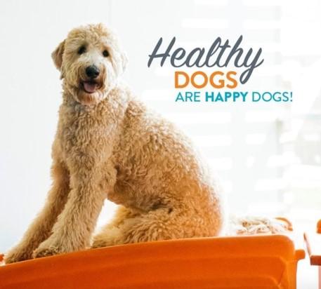 Les chiens heureux sont des chiens heureux!
