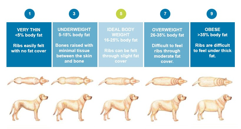 Pet weight scale