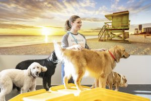 5 Reasons to Try Dogtopia Daycare