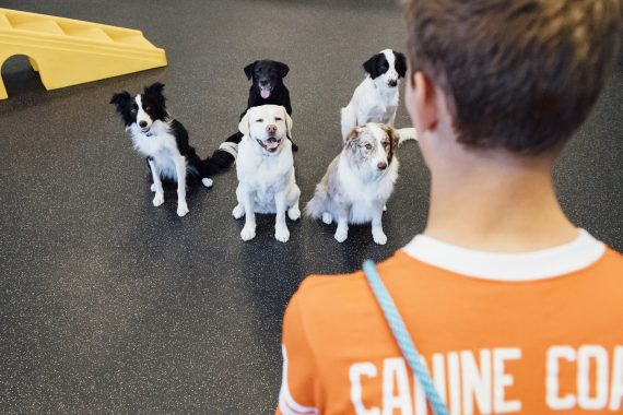 Dog Socialization Challenges from the Pandemic