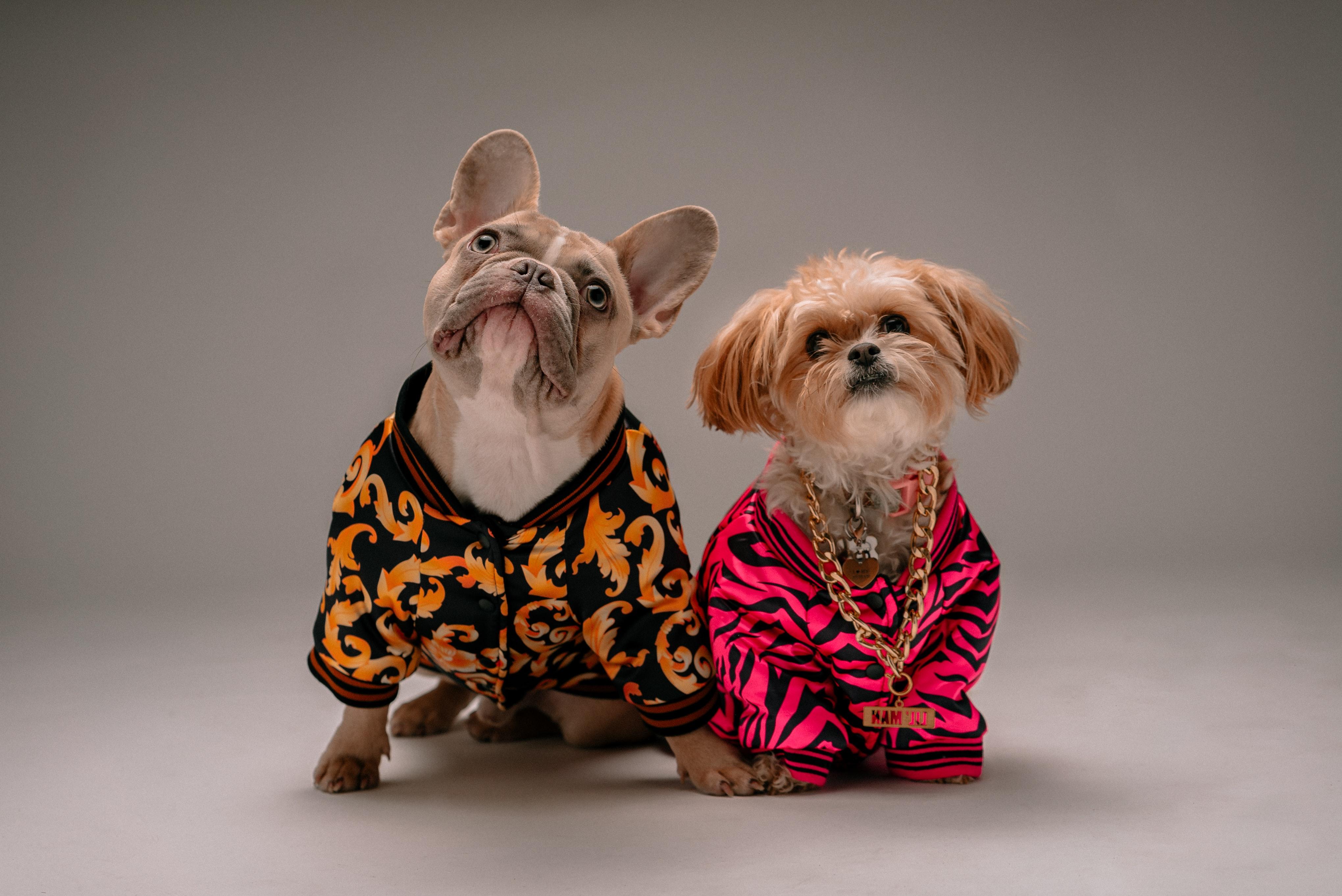 Conseils d'Halloween pour les chiens