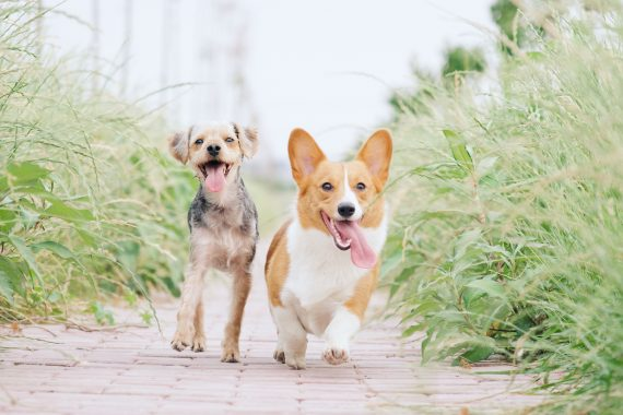 Tips for adding a second dog to your family