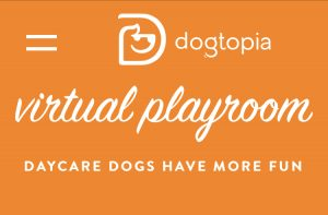 Enjoy the Dogtopia Virtual Playroom