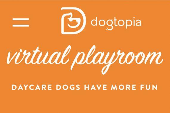 Enjoy the Dogtopia Virtual Playroom