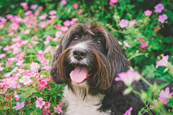 Signs Your Dog is Suffering from Seasonal Allergies