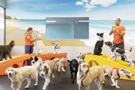 Understanding Your Dog's Playroom Behavior