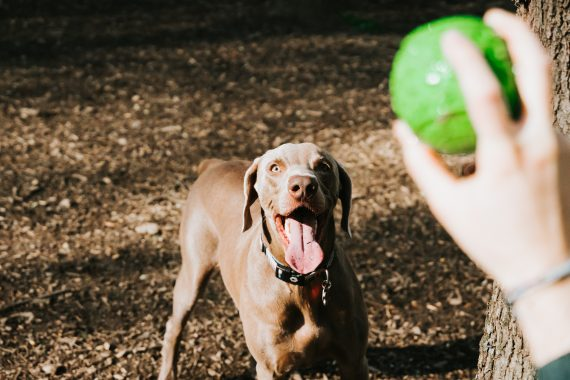 April is Canine Fitness Month: Keep Your Dog Fit with These Fun Exercises