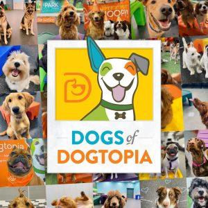 Dogs Of Dogtopia Calendar contest