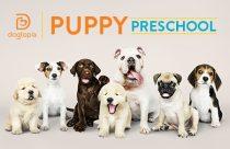 Dogtopia Puppy Preschool
