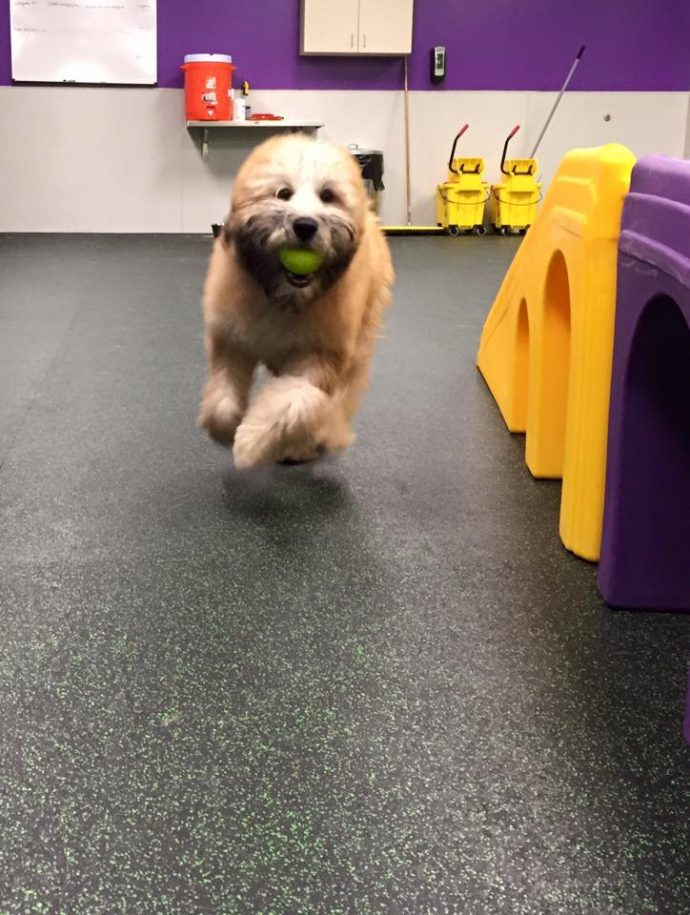 Wexford's first day at Dogtopia