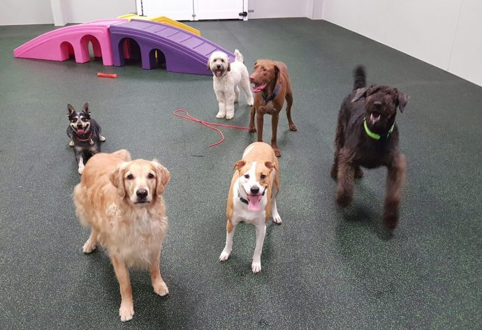 We Are Ready To Play At Dogtopia