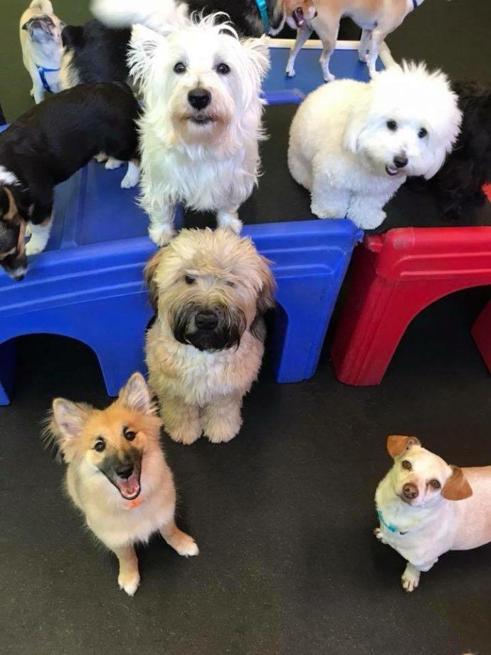 Toybox Pups