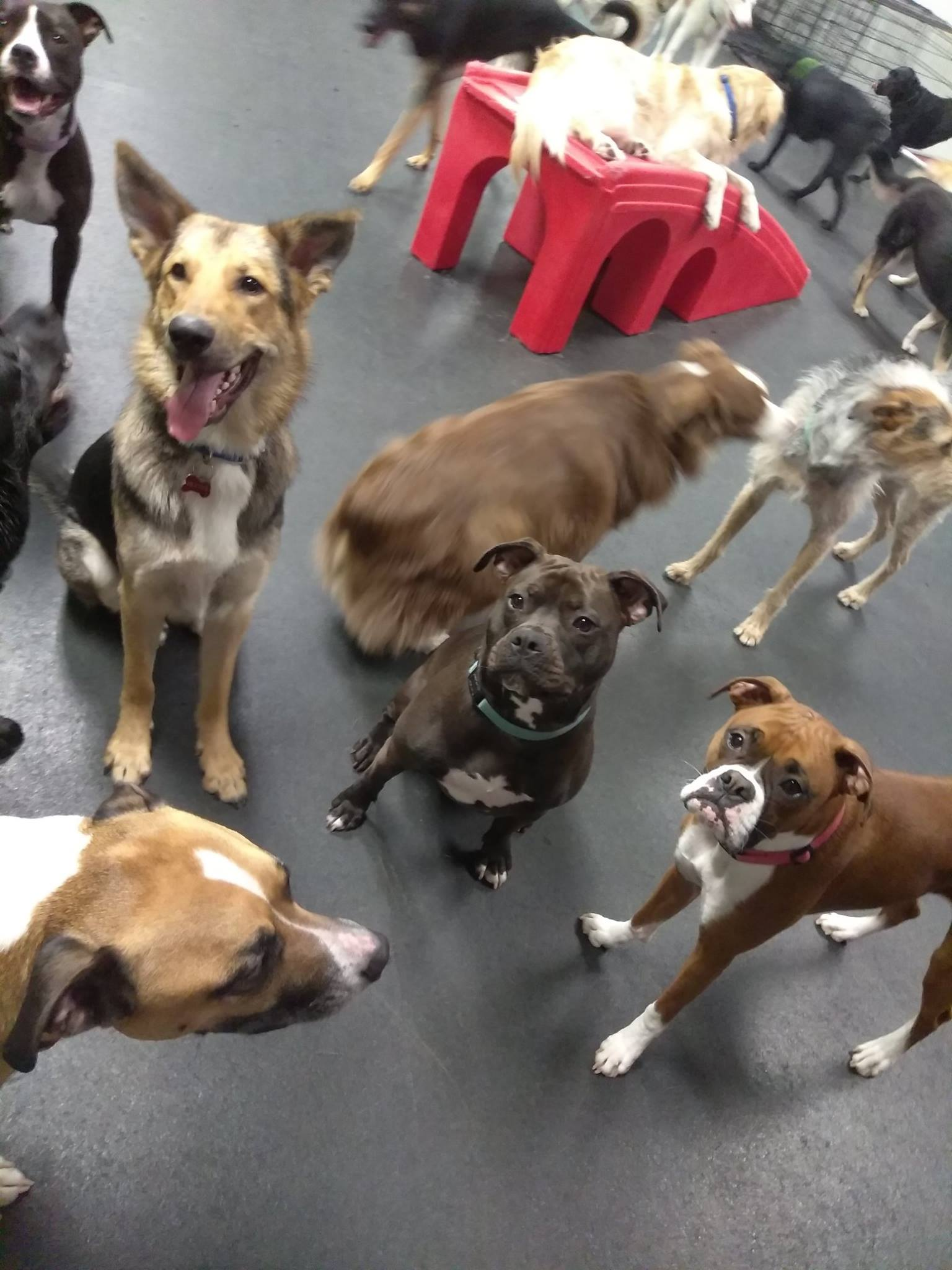 doggy daycare breed restrictions