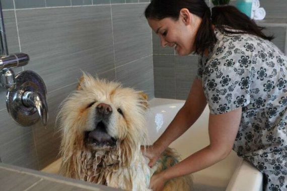 A dog getting groomed at Dogtopia's spa!