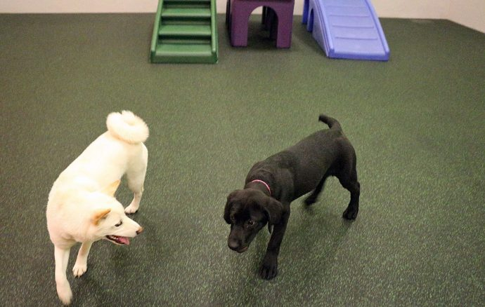Dogs at play in our daycare!