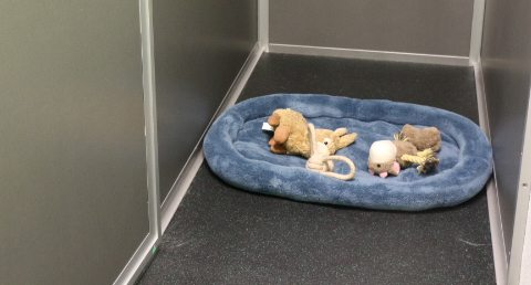 Dog bed in the Dogtopia suites