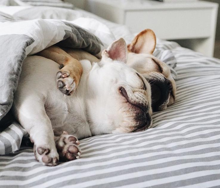 Прикольные картинки с животными ржачные спящие, моему сладкому