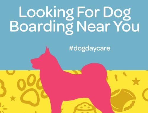 dog boarding near you commerce twp mi
