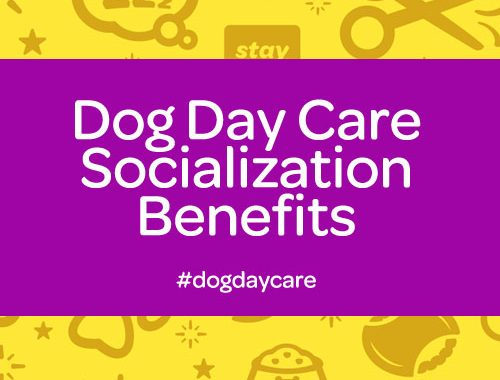 dog day care socialization in commerce twp mi