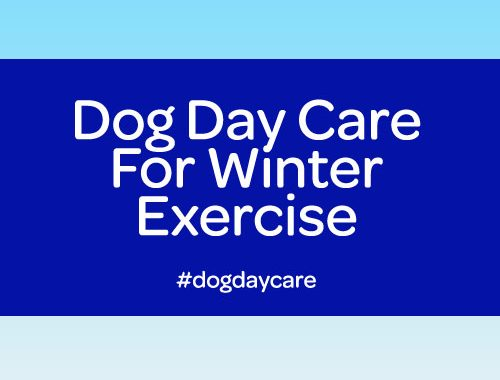 dog day care winter exercise for dogs commerce twp mi