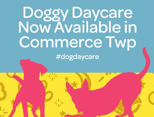 doggy daycare now available in commerce twp mi