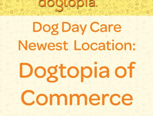 new dog day care dogtopia of commerce