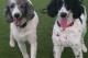 dog training commerce township mi