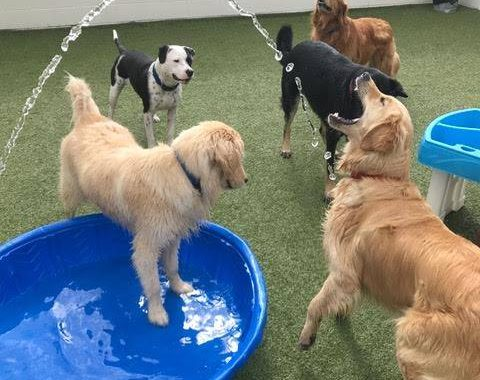 doggy day care near me commerce twp mi