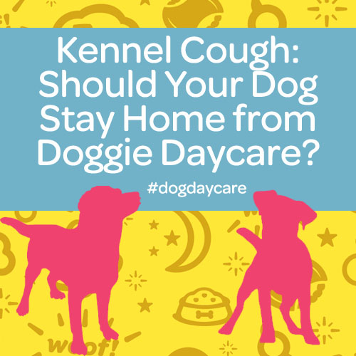 Kennel Cough: Should Your Dog Stay Home From Doggie