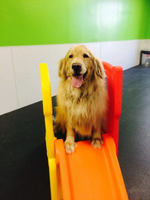 dog boarding facilities bloomfield hills mi