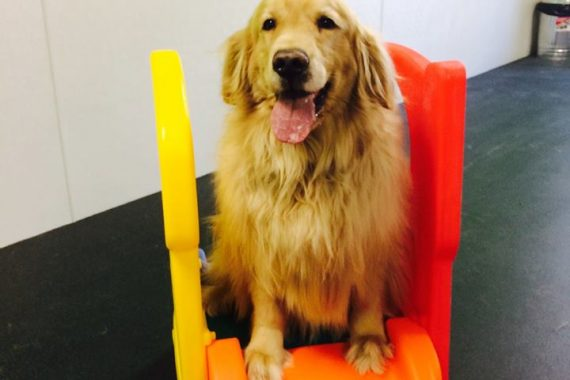 dog boarding facilities bloomfield hills mi