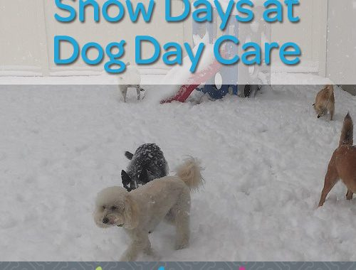 snow days at dog day care in bloomfield hills mi