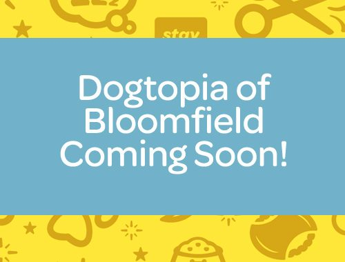 dogtopia of bloomfield hills doggy daycare