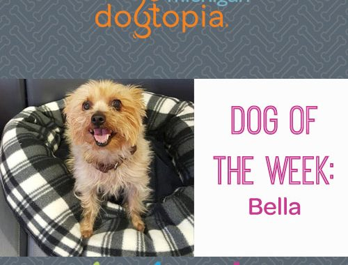 dog day care bloomfield dog of the week bella