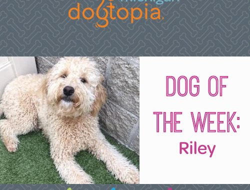 dog day care bloomfield dog of the week riley