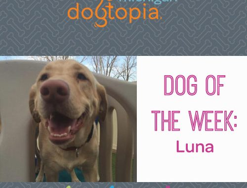 dog day care bloomfield dog of the week luna