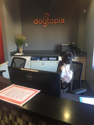 take your dog to work 2016 doggie day care bloomfield mi