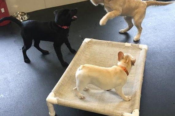 puppy socialization bloomfield hills mi