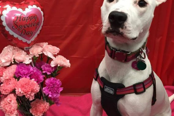 adopt shelter dog and take to dog day care bloomfield hills mi