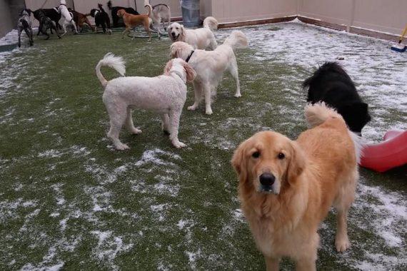dog day care near me bloomfield mi