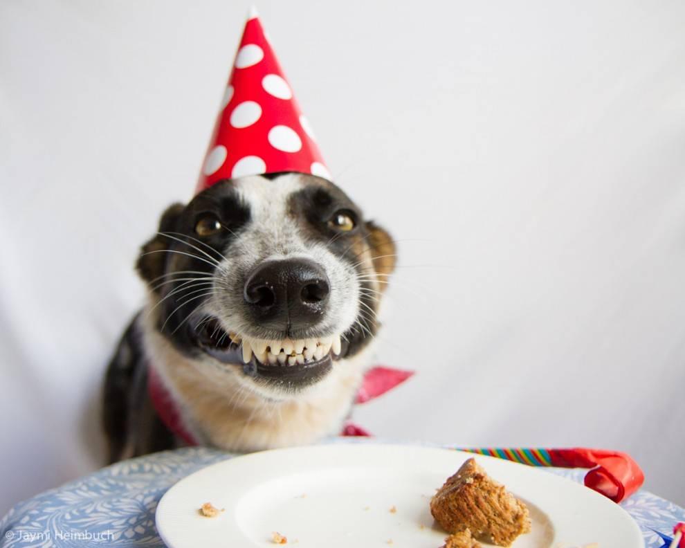 Поздравления с днем рождения собаки картинки