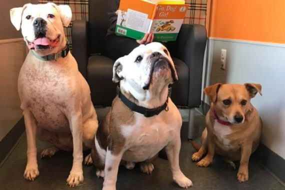 doggy day care in bloomfield hills mi encourages building dog intelligence and listening skills